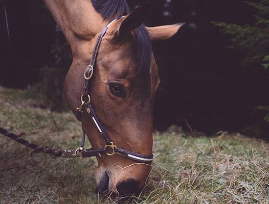 Cours d'équitation Marcq-en-Baroeul